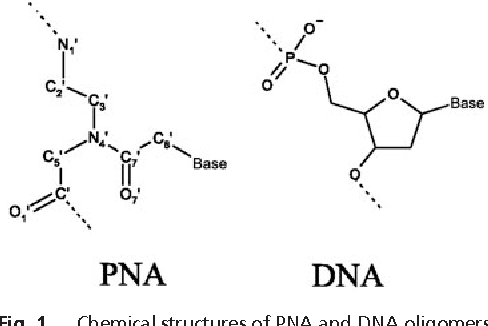Figure 1 From Insights Into Peptide Nucleic Acid Pna Structural