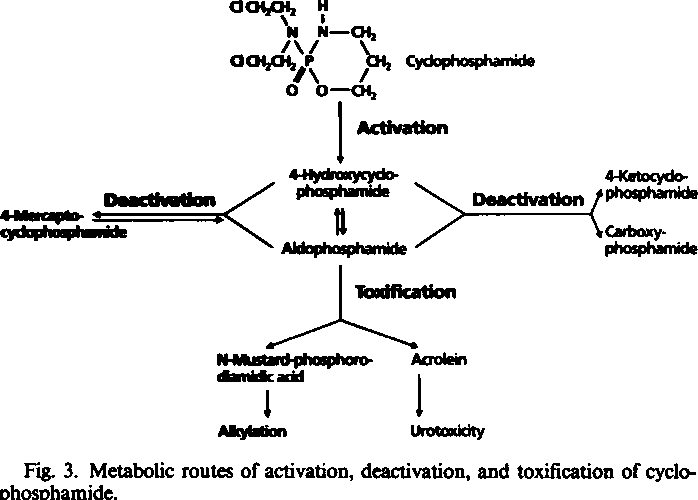 Fig. 3. Metabolic routes of activation, deactivation, and toxification of Cyclo phosphamide.
