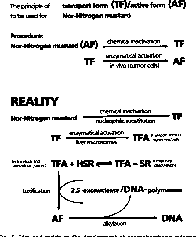 Fig. 5. Idea and reality in the development of oxazaphosphorin cytostatics.