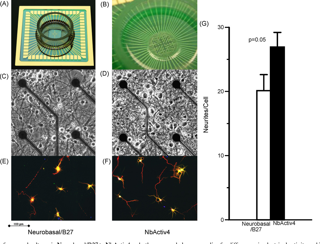 Fig. 2 shows traces of electrical activity on three of the ctive electrodes for cultures in either Neurobasal/B27 or NbAciv4. In general, neurons in NbActiv4 produced more bursts a d a