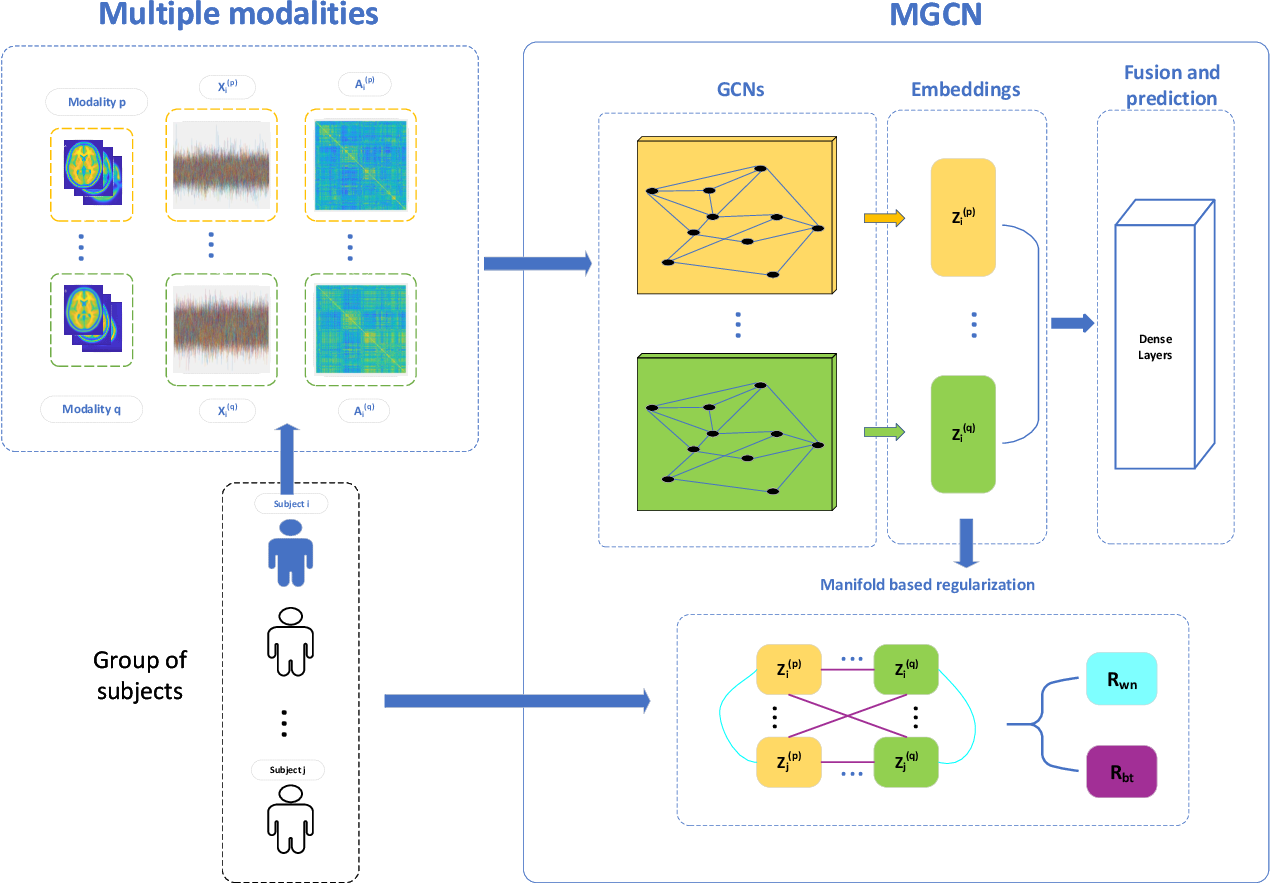 Figure 1 for Ensemble manifold based regularized multi-modal graph convolutional network for cognitive ability prediction