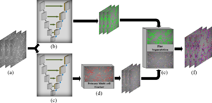 Figure 1 for Joint Multi-frame Detection and Segmentation for Multi-cell Tracking