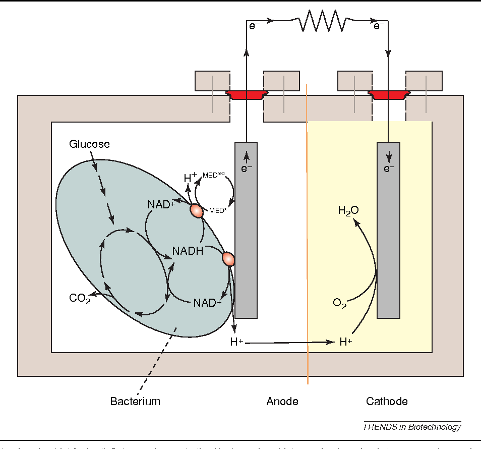 Figure 1 from Microbial fuel cells: novel biotechnology for energy