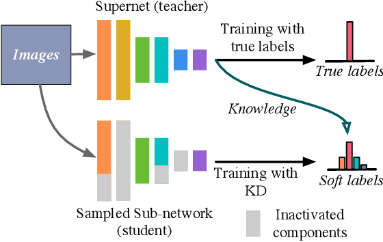 Figure 1 for AlphaNet: Improved Training of Supernet with Alpha-Divergence
