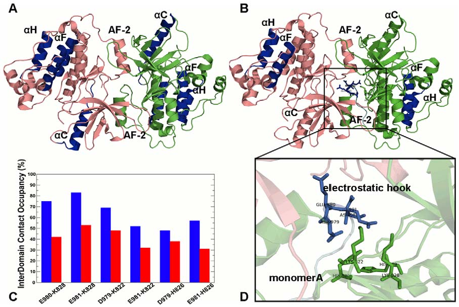 Figure 10. Allosteric Communications and Stabilizing Interactions in an Extended Structure of a Symmetric EGFR Dimer. Structural mapping of the kinase regions involved in long-range communications (highlighted in blue) at the reference communication distance of 30 Å (A) and 60 Å (B). The monomer A (receiver molecule) is shown in green and the monomer B (activator molecule) is shown in pink. The extended crystal structure of the inactive symmetric dimer (PDB ID 3GT8) was used in simulations and allosteric analysis. An overview of the inter-monomer interface is indicated by a rectangular in (B). (C) The occupancy of the critical interdomain interface contacts in the symmetric EGFR dimer. The occupancies for the EGFR-WT are shown in blue bars and for the EGFR-T766M mutant in red bars. (D) An exploded view of the electrostatic hook formed between the C-terminal tail residues 979–990 (shown in pink) and the hinge region in the receiver kinase domain (shown in green). doi:10.1371/journal.pcbi.1002179.g010
