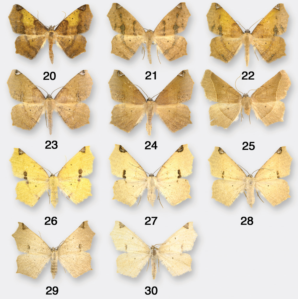 figure 20–30