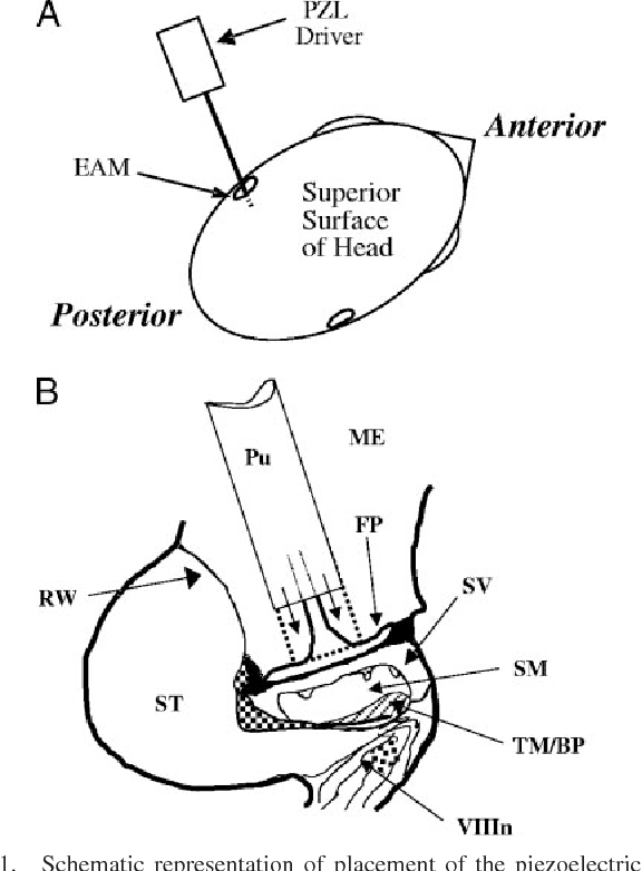 Figure 1 From Emergence Of Hearing In The Chicken Embryo