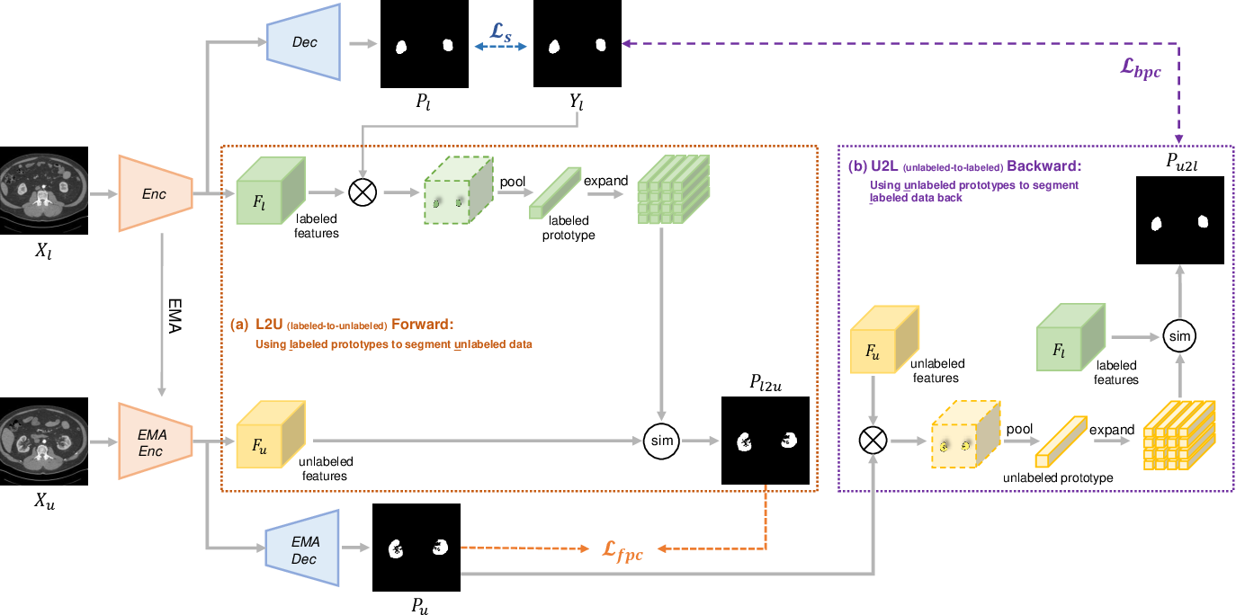 Figure 2 for All-Around Real Label Supervision: Cyclic Prototype Consistency Learning for Semi-supervised Medical Image Segmentation