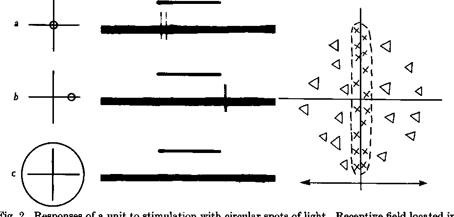 Responses Of A Unit To Stimulation With Circular Spots Of Light.