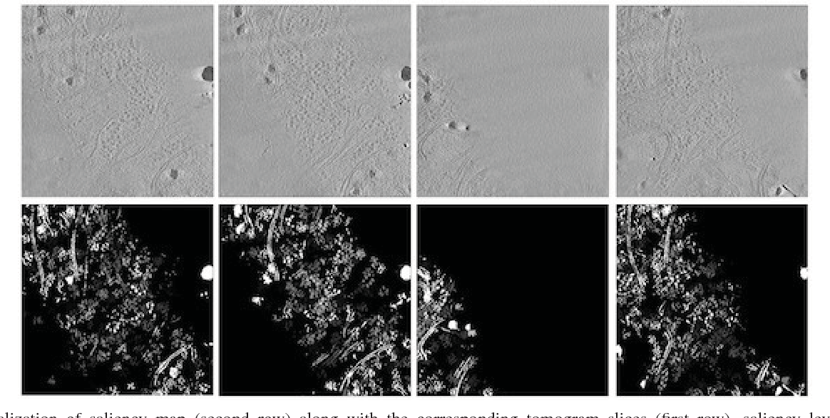 Figure 1 for Feature Decomposition Based Saliency Detection in Electron Cryo-Tomograms