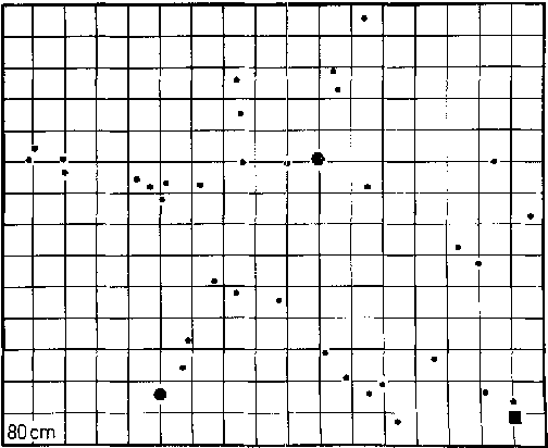 Figure 7 from Stone dropping by Conomyrma bicolor