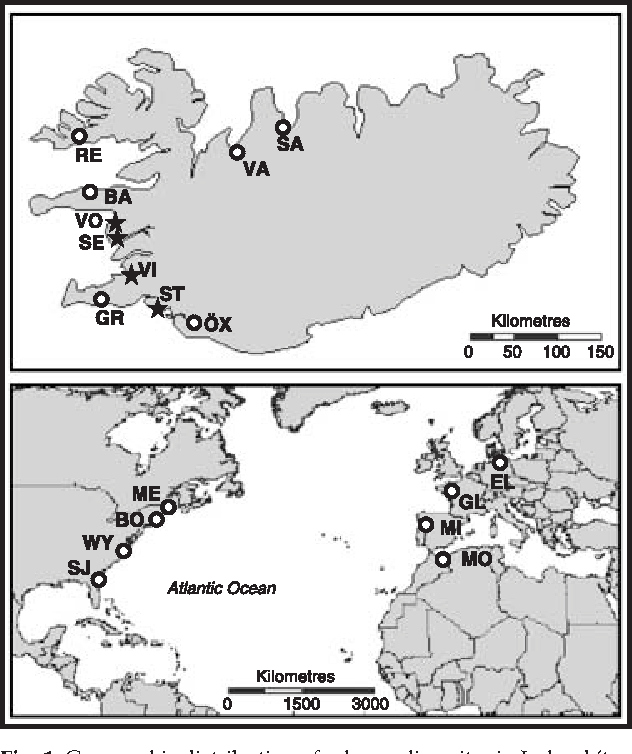 Figure 1 From Natural Hybrids In Atlantic Eels Anguilla Anguilla A