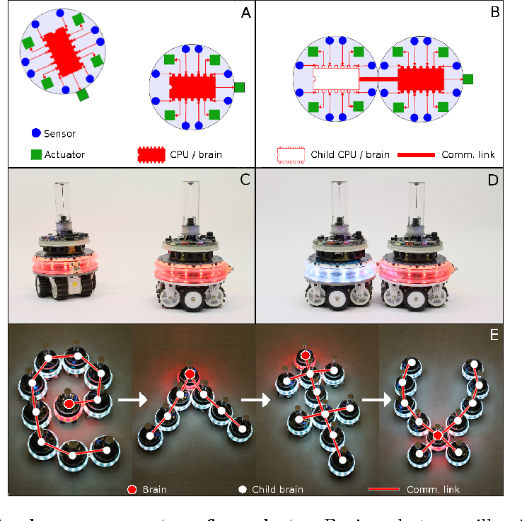 Figure 1 for Virtual Nervous Systems for Self-Assembling Robots - A preliminary report