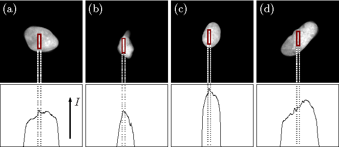 Figure 3 for Automated Image Processing for the Analysis of DNA Repair Dynamics