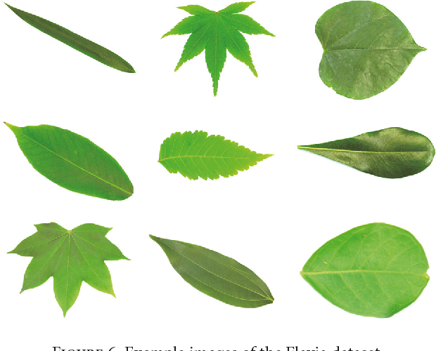 PDF] Deep Learning for Plant Identification in Natural Environment