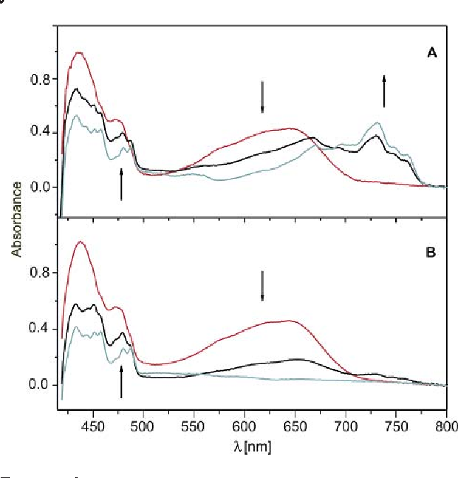 FIGURE 3. (A) Red spectrum: Electronic absorption spectrum obtained after radiolysis of a frozen MTHF saturated with anthralin dimer, (2)2 (<0.005 M, deoxygenated solution, radiation dose 4.1 kGy, sample thickness 2 mm) at 77 K. Black and gray traces: spectral changes observed upon annealing of the above matrix at 90-95 K. (B) Same as A, but starting with a solution that was saturated with O2 before freezing (note that the initial spectrum is not affected by the presence of O2).