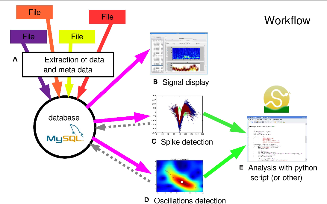 PDF] OpenElectrophy: An Electrophysiological Data- and Analysis
