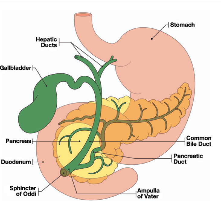 Figure 1 from Imaging features of benign and malignant ...