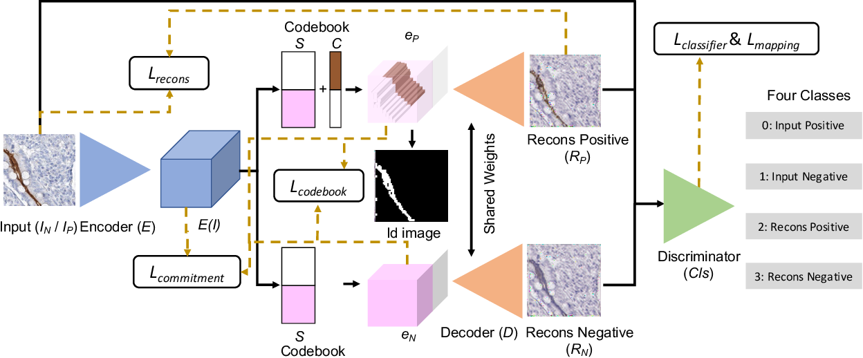 Figure 3 for CaCL: Class-aware Codebook Learning for Weakly Supervised Segmentation on Diffuse Image Patterns