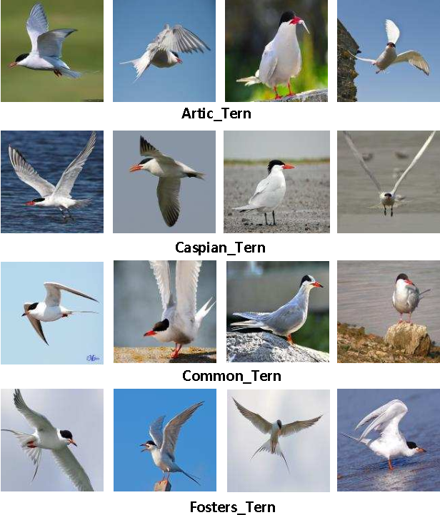 Figure 1 for The Application of Two-level Attention Models in Deep Convolutional Neural Network for Fine-grained Image Classification