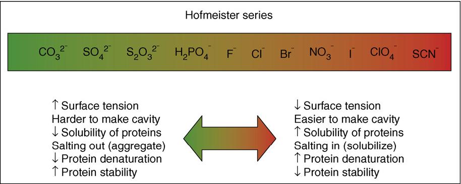 Hofmeister Serie