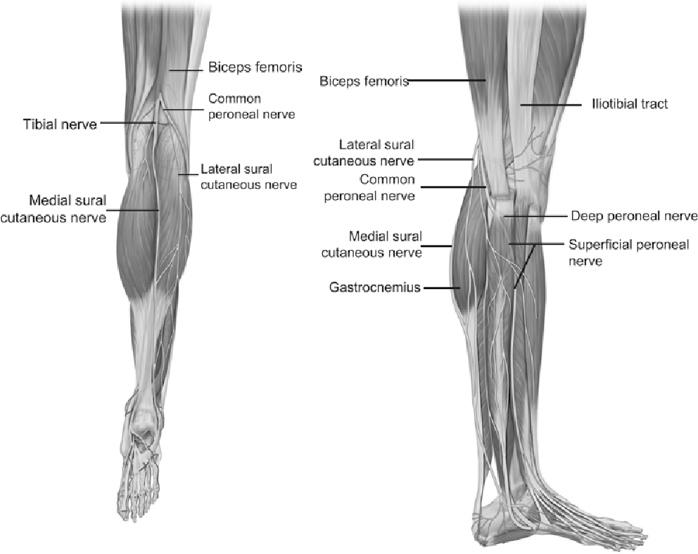 Figure 2 from Peroneal nerve injury associated with sports-related ...