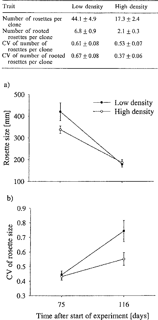 Fig. 2. The efTect of density treatment on (a) the mean size of rooted rosettes, and on (b) the mean coefficient of variation (CV) of rosette size in the experiment with Ranuneu/us replans. Measurements werc made 75 and 116 d after the start of the experiment. Rosette size denotes the product of the number of leaves and the length of the longest leaf. Parameter estimates arc given ± I SE.
