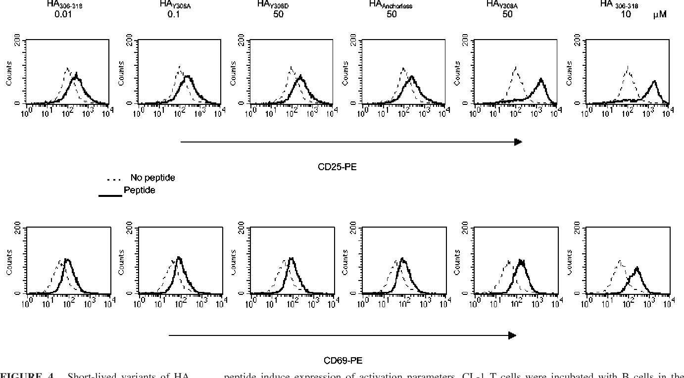 FIGURE 4. Short-lived variants of HA306–318 peptide induce expression of activation parameters. CL-1 T cells were incubated with B cells in the absence of peptide or presence of the indicated concentrations of peptides for 5–18 h. Cells were stained with FITC-conjugated anti-human CD4 followed by PE-conjugated anti-human CD25 and anti-human CD69. Results are representative of three independent experiments.