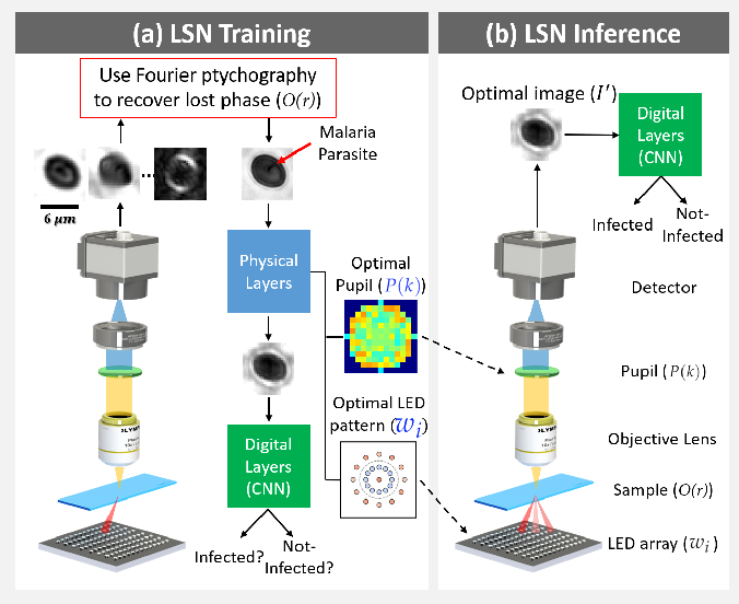 Figure 1 for Multi-element microscope optimization by a learned sensing network with composite physical layers