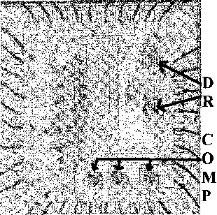 Fig. 2. Test IC: driver and comparator locations are indicated.