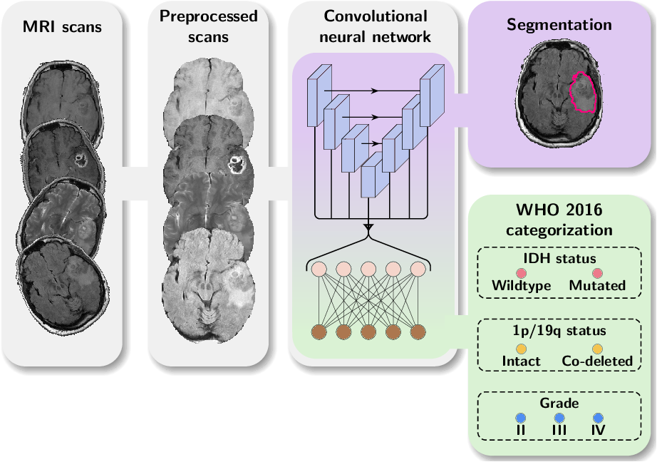Figure 1 for WHO 2016 subtyping and automated segmentation of glioma using multi-task deep learning