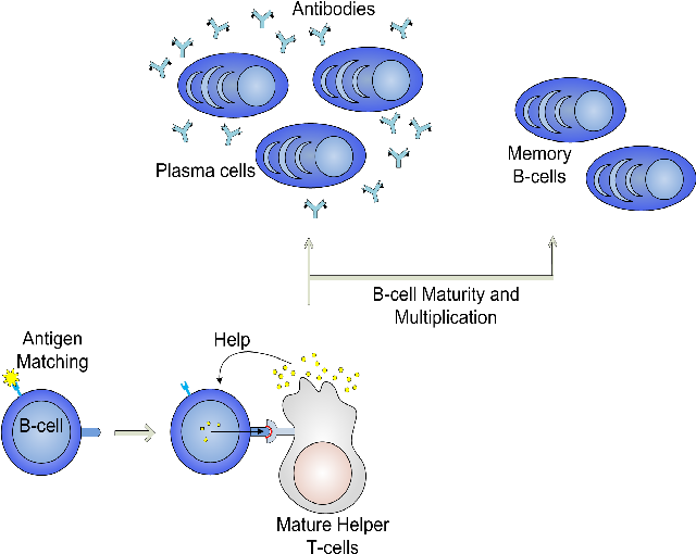 Figure 3 for Immuno-inspired robotic applications: a review