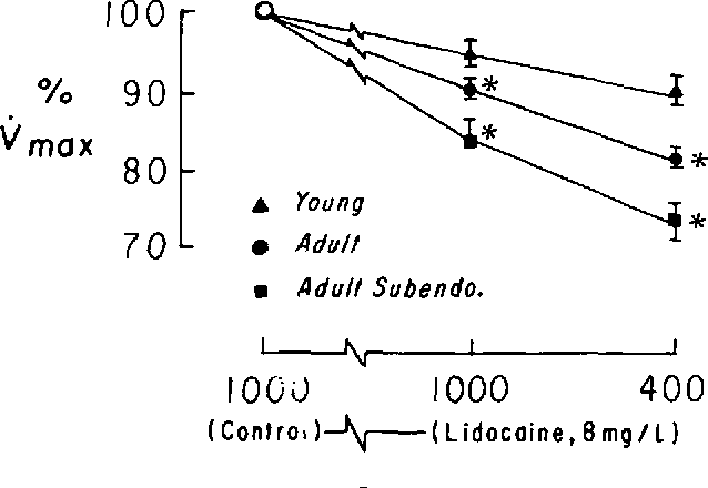 FIGURE 2. Effects of lidocaine, (8 mg/liter) on tonic and on usedependent block. The ordinate shows the percent change of the steady state value of Vm.xfrom its initial control value (represented as 100%). The abscissa shows the BCL Values from 13 fibers from young dogs (A), 11 free-running adult fibers (9), and nine adult subendocardial fibers (W) are shown. Tonic block was assessed by the reduction of Vaa during periods of slow stimulation at BCL = WOO msec. Usedependent block was assessed during a period of rapid stimulation at BCL = 400 msec. The asterisks indicate P < 0.05 compared to the fibers from young dogs.