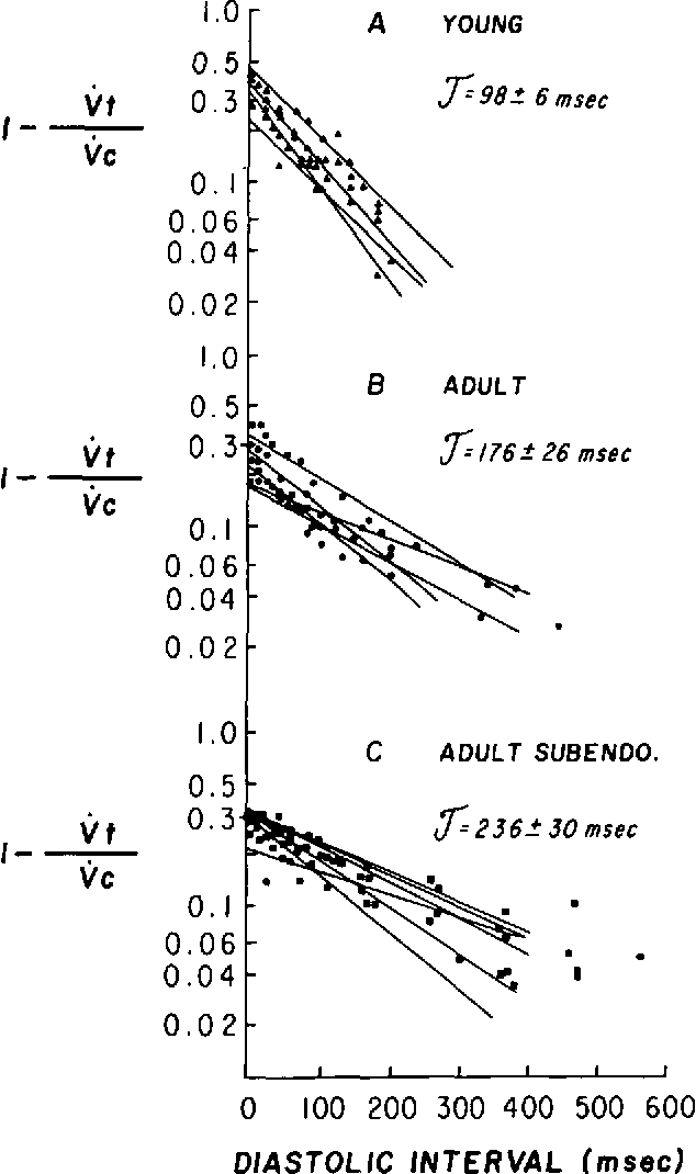 FIGURE 7. The steady state recovery kinetics of Vmal from lidocaine, 6 mg/liter. Data from five young free-running Purkinje fibers (A, panel A), five adult free-running Purkinje fibers (•, panel B), and six adult subendocardial Purkinje fibers A panel O are presented. The recovery time course is plotted on a semilogarithmic scale as the ratio of (1-Vma (test)/Vmn (conditioning)) against the diastolic interval (msec). For each group, the recovery time constant T, IS calculated and presented as mean ± SE T for neonates is significantly less than in both adult groups (P < 0.05). The adult values do not differ from