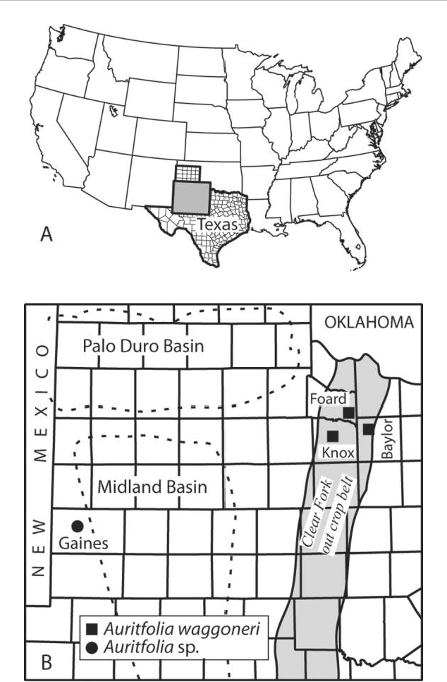 Map Of Texas County Lines.Figure 1 From Auritifolia Gen Nov Probable Seed Plant Foliage