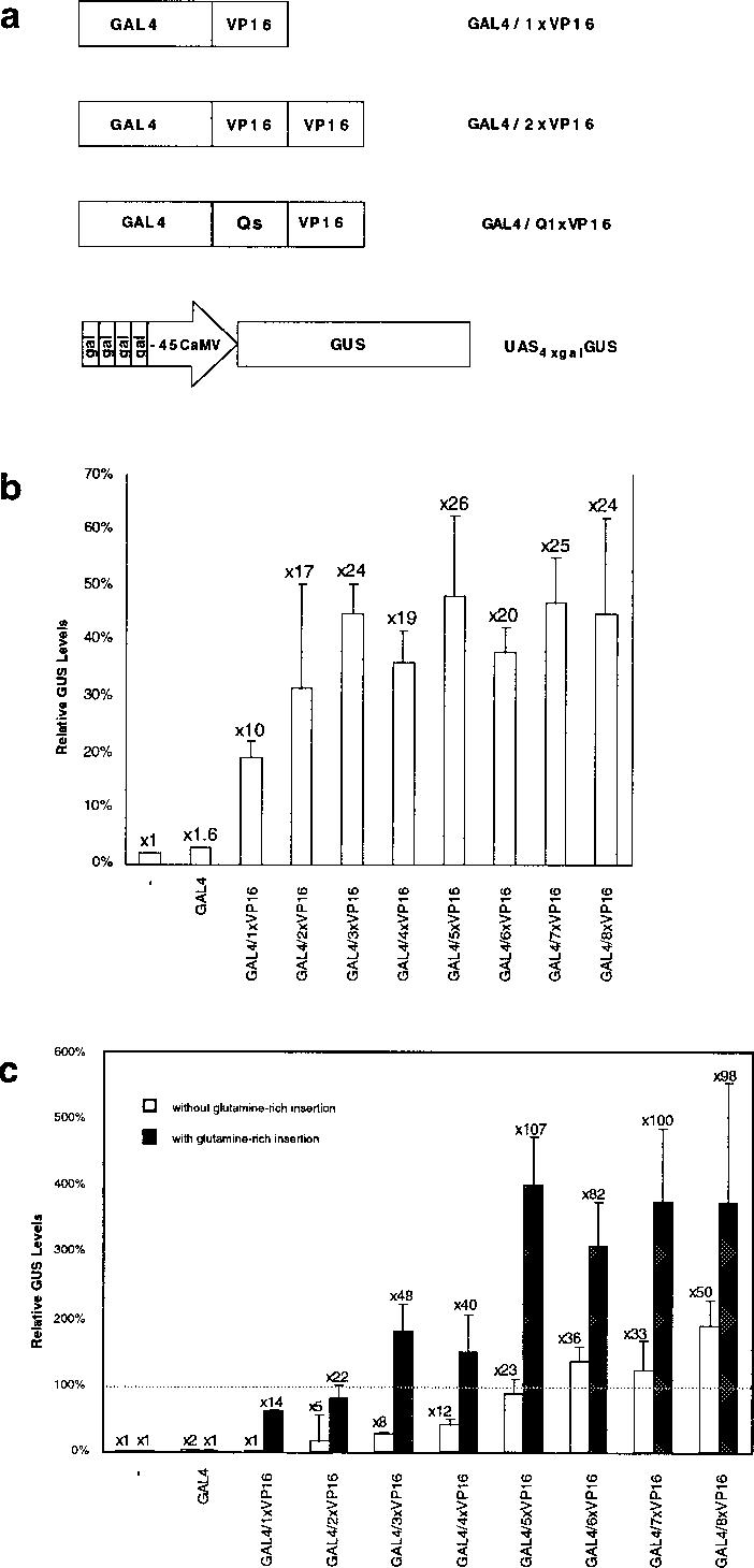 transcriptional activation activities