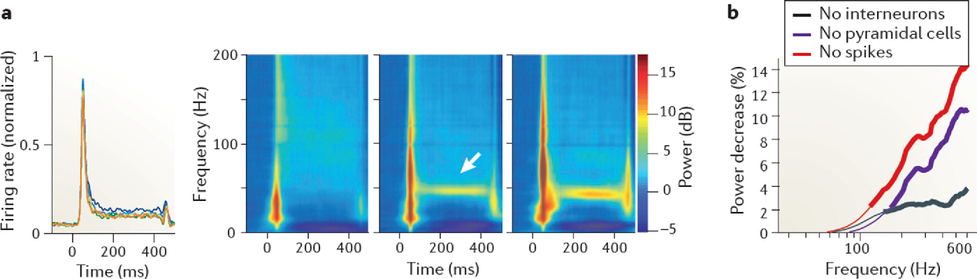 Figure 5. Spike contribution to the LFP a | Average multiunit recording of the visual cortex of a monkey during presentation of a static grating (0 to 400 ms) at six different sizes, shown in different colours (left panel). Also shown are time–frequency–power difference plots demonstrating the difference between baseline power (in dB) and power in response to increasing size stimuli (right panel). Note the increase in wide-band power (at ~50 ms) with increased firing and synchrony of units after stimulus onset. The arrow indicates sustained gamma frequency oscillation. b | The effect of local field potential (LFP) 'de-spiking' on spectral power. The figure shows the percentage change of power at different frequencies after de-spiking the LFP. Thick lines indicate the frequencies at which there was a significant difference between the original LFP power and the power of the LFP after removing interneuron spikes (No interneurons), pyramidal cell spikes (No pyramidal cells) or all spikes (No spikes). Part a is reproduced from REF. 162. Part b is reproduced, with permission, from REF. 111 © (2012) Society for Neuroscience.