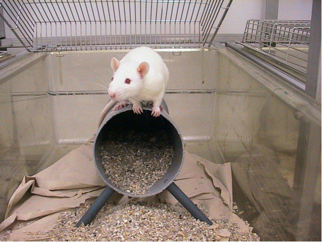 Pharmacological validation of a refined burrowing paradigm