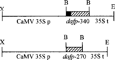 Figure 2. Diagram of the dafp-340 and dafp-270 genes introduced into plants. CaMV 35S p and 35S t represent CaMV 35S promoter and terminator, respectively. X, XbaI; B, BamHI; E, EcoRI.