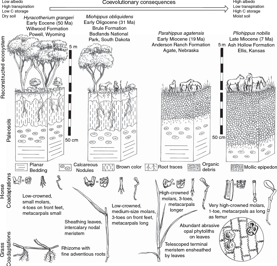 Figure 2 From Coevolution Of Life And Earth Semantic Scholar