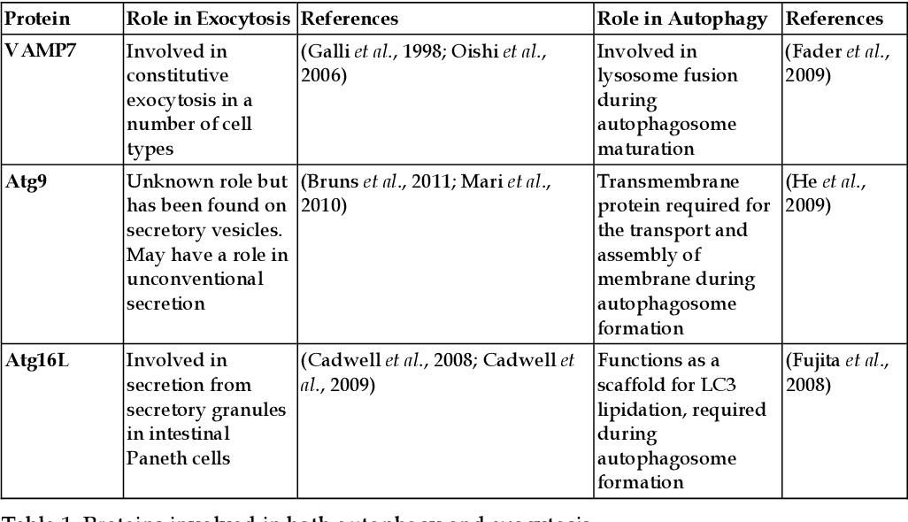 Crosstalk and Integration of Membrane Trafficking Pathways