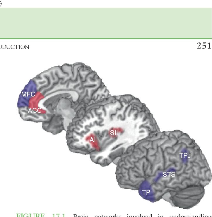 Understanding Brain Mechanisms Of >> Understanding Others Brain Mechanisms Of Theory Of Mind And Empathy