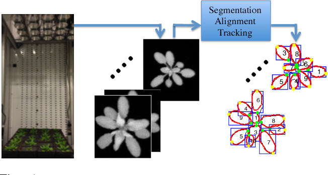 Figure 1 for Joint Multi-Leaf Segmentation, Alignment and Tracking from Fluorescence Plant Videos