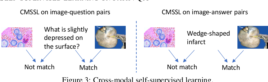 Figure 4 for Pathological Visual Question Answering