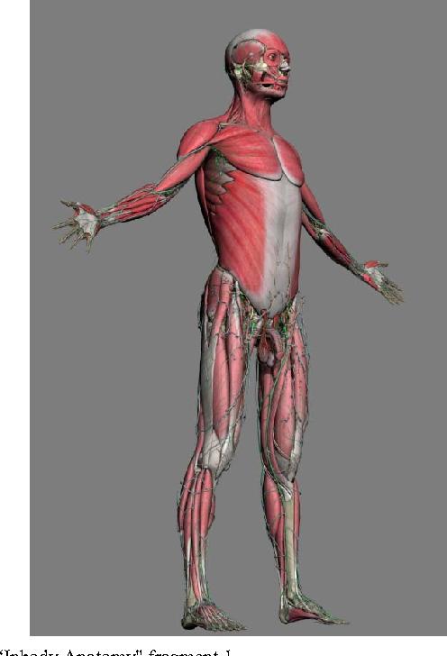 Intelligent Sdk For 3d Surgery Simulation Semantic Scholar