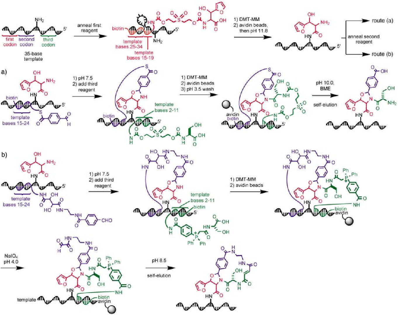 Figure 13 from DNA-templated organic synthesis: nature\'s strategy ...