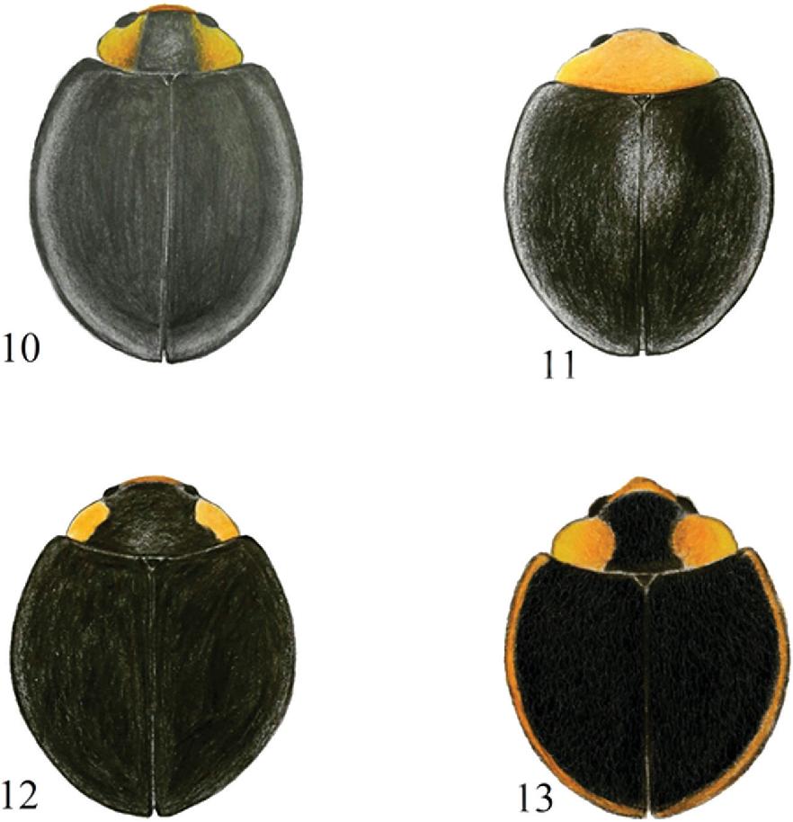 figure 10–13