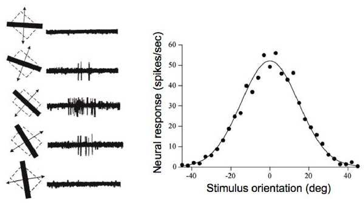 Figure 4 for Robust and scalable Bayesian analysis of spatial neural tuning function data