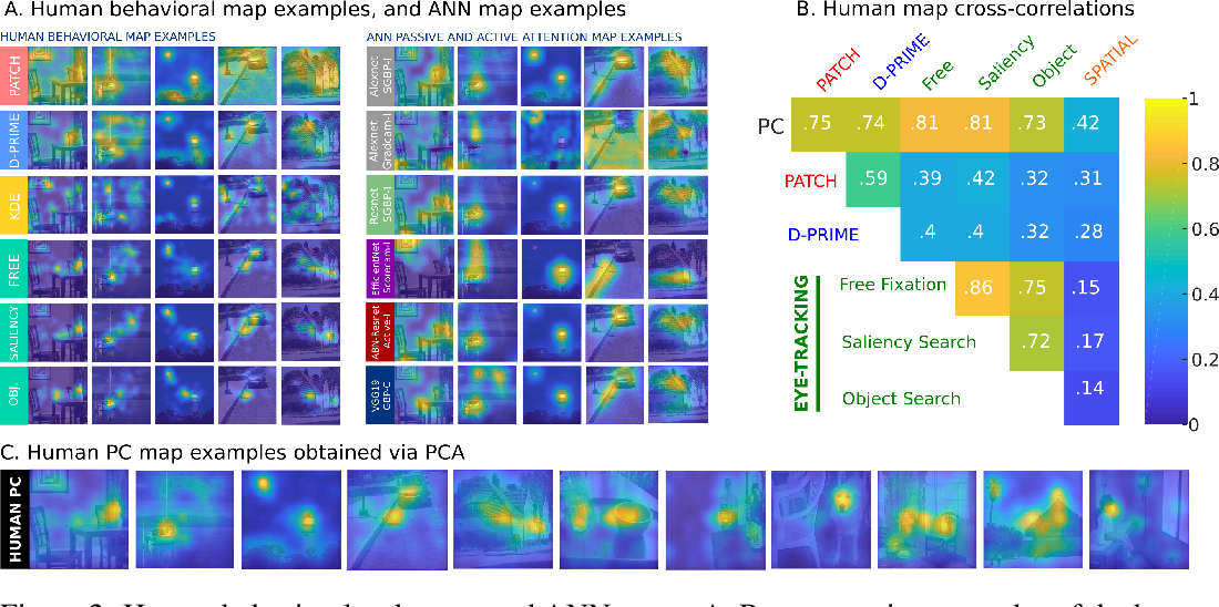 Figure 3 for Passive attention in artificial neural networks predicts human visual selectivity