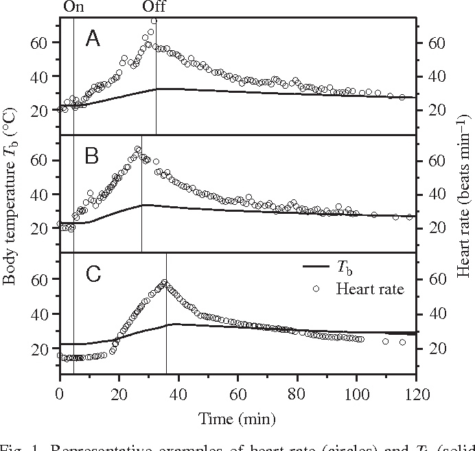 Control of heart rate during thermoregulation in the heliothermic figure 1 ccuart Gallery